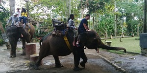 Bali Bakas Elephant Ride for 30 minutes