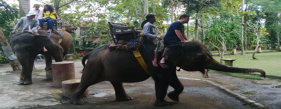 Bali Bakas Elephant Ride Tour Packages