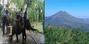 Bali Elephant Ride and Kintamani Tours