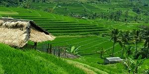 Bali Jatiluwih Tours