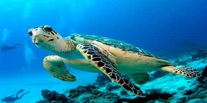 Bali Water Sports - Turtle Islands Tour Packages